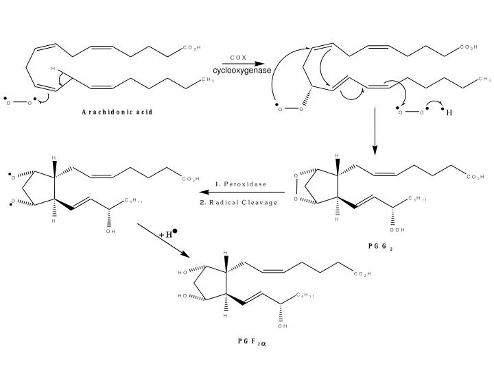 cyclooxygenase