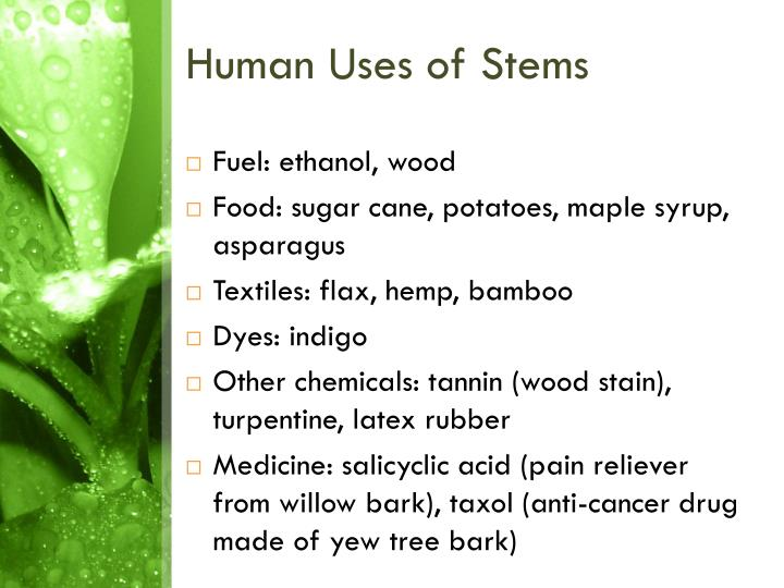 Human Uses of Stems
