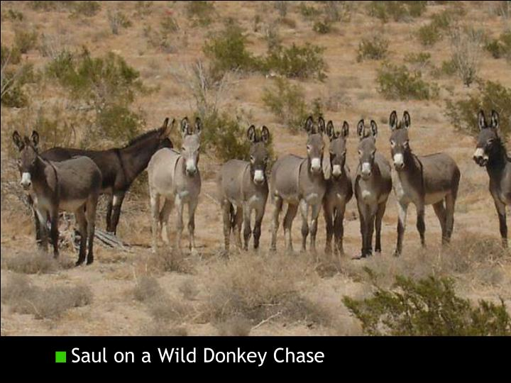 Saul on a Wild Donkey Chase