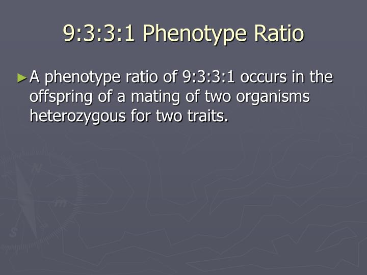 9:3:3:1 Phenotype Ratio