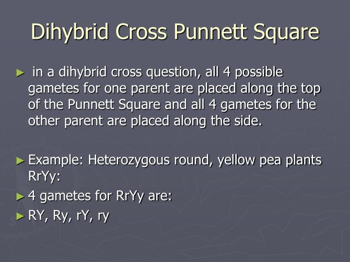 Dihybrid Cross Punnett Square