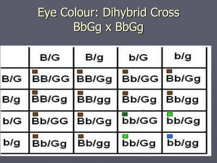 Eye Colour: Dihybrid Cross