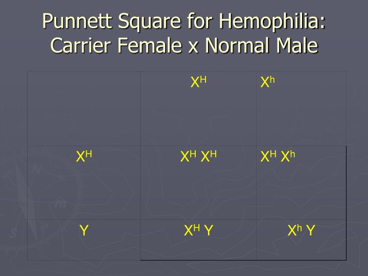 Punnett Square for Hemophilia: Carrier Female x Normal Male