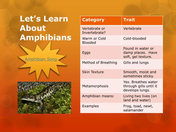 Let s learn about amphibians