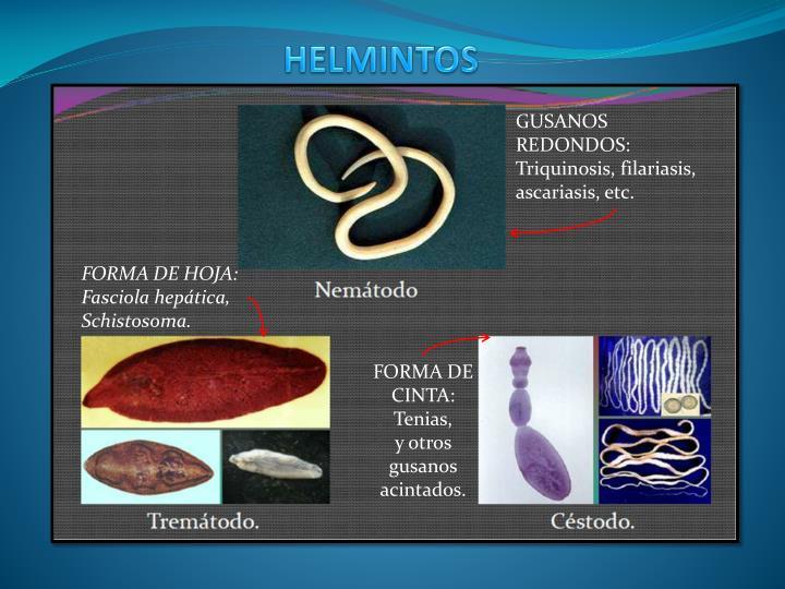 HELMINTOS