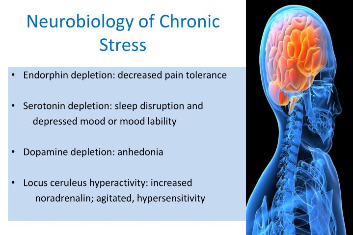 Neurobiology of Chronic Stress