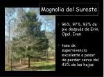 magnolia del sureste