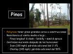 pinos1