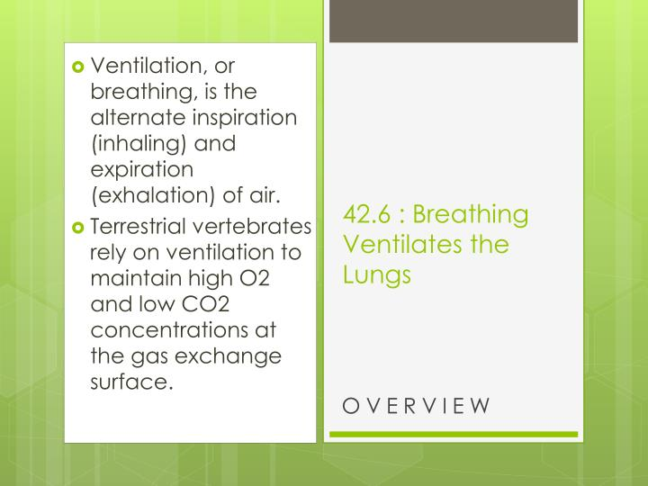 Ventilation, or breathing, is the alternate inspiration (inhaling) and expiration (exhalation) of air.