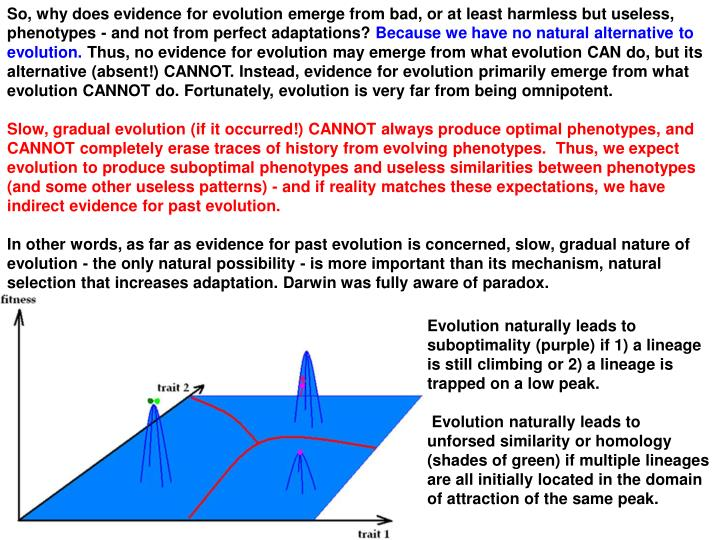 So, why does evidence for evolution emerge from bad, or at least harmless but useless, phenotypes - and not from perfect adaptations?
