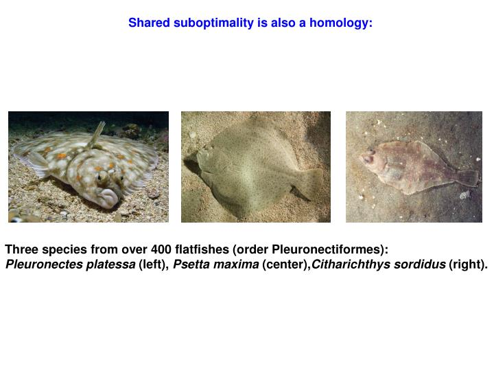 Shared suboptimality is also a homology: