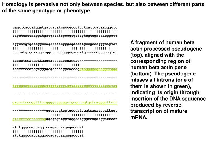 Homology is pervasive not only between species, but also between different parts of the same genotype or phenotype.