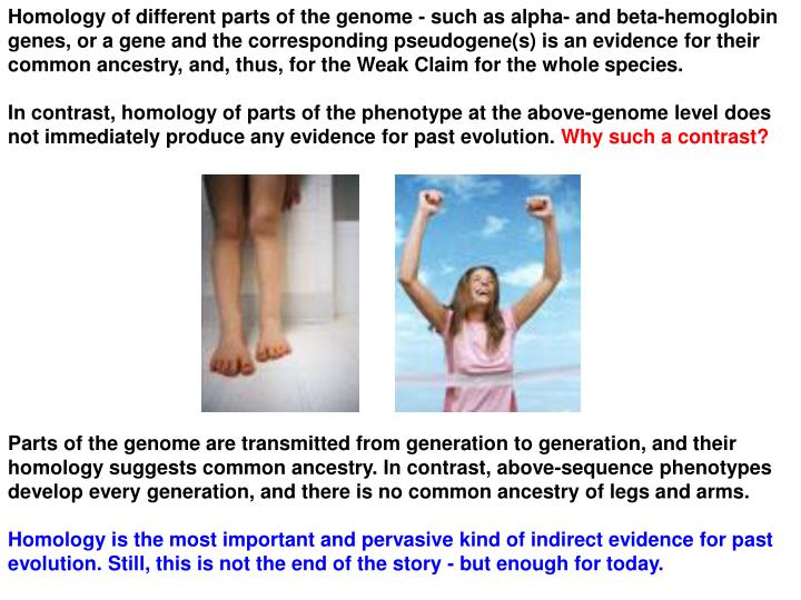 Homology of different parts of the genome - such as alpha- and beta-hemoglobin genes, or a gene and the corresponding pseudogene(s) is an evidence for their common ancestry, and, thus, for the Weak Claim for the whole species.