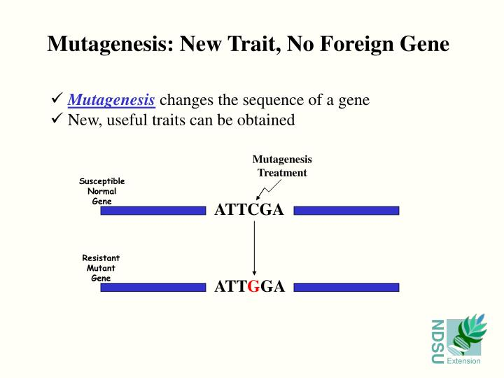 Mutagenesis: New Trait, No Foreign Gene