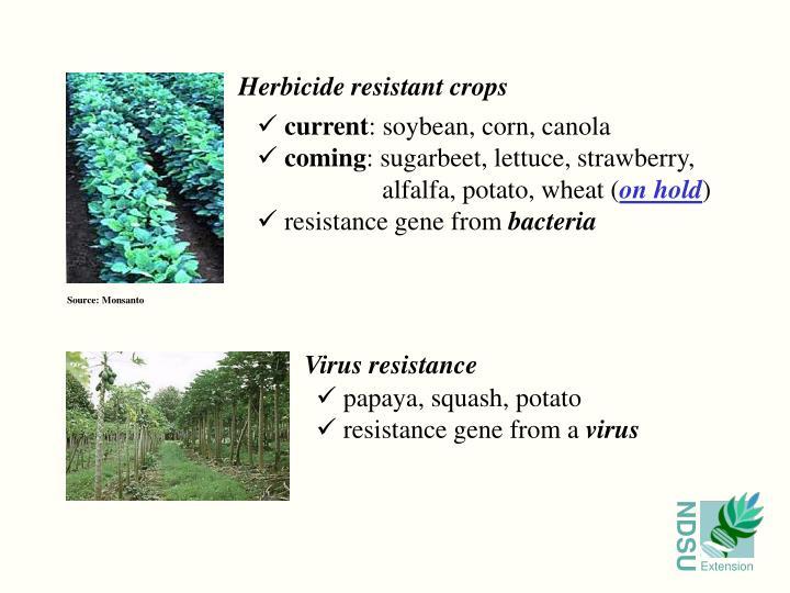 Herbicide resistant crops