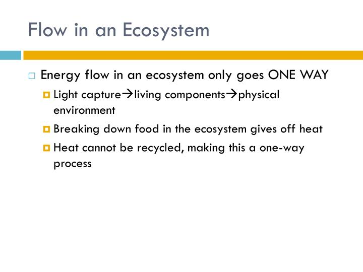 Flow in an Ecosystem