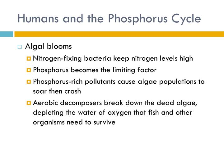 Humans and the Phosphorus Cycle