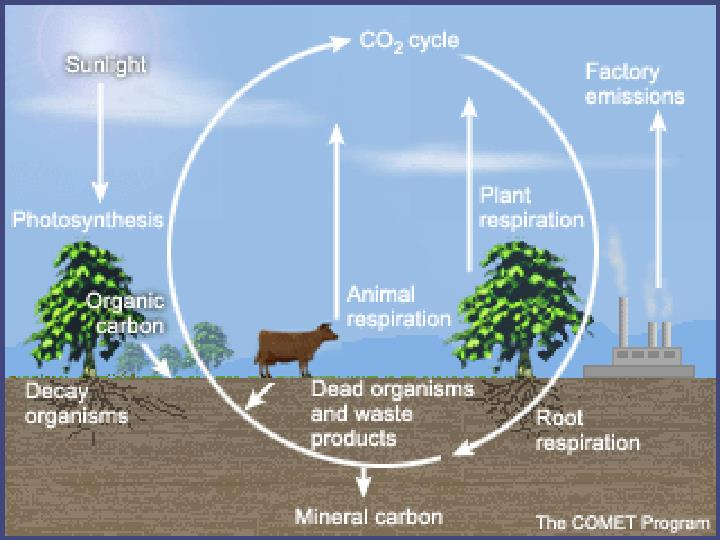 INSERT CARBON CYCLE PIC