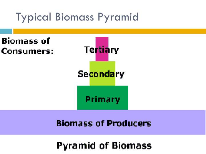 Typical Biomass Pyramid