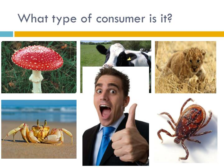 What type of consumer is it?