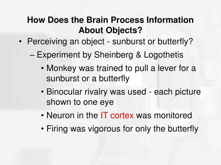 How Does the Brain Process Information About Objects?