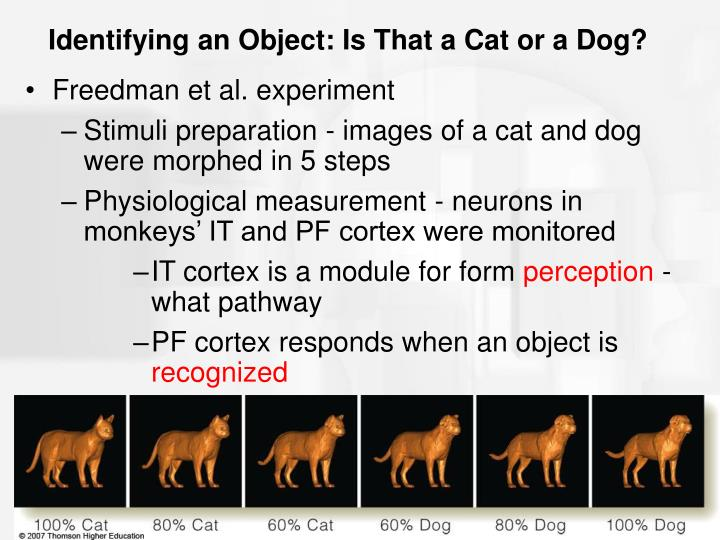 Identifying an Object: Is That a Cat or a Dog?