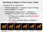 identifying an object is that a cat or a dog