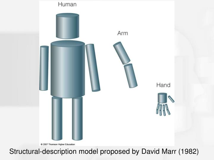 Structural-description model proposed by David Marr (1982)