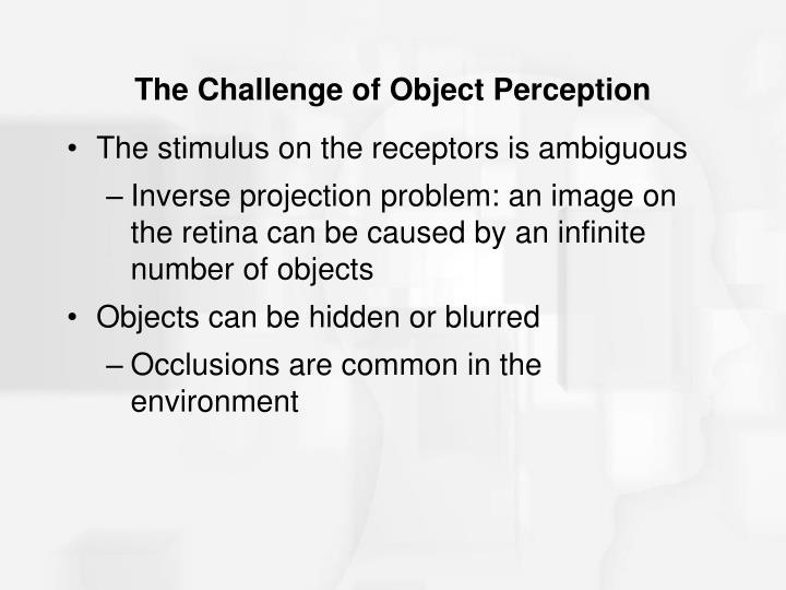 The challenge of object perception