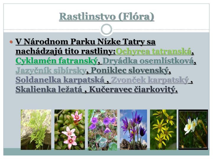 Rastlinstvo (Flóra)