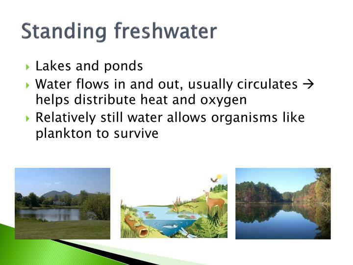 Standing freshwater