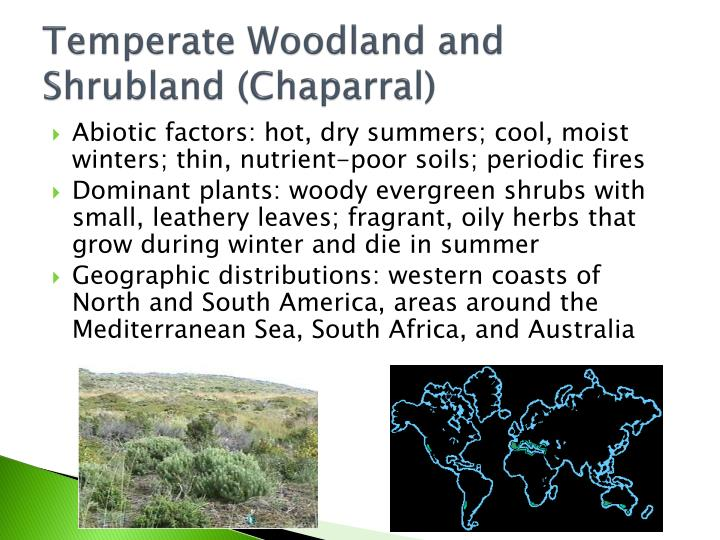 Temperate Woodland and