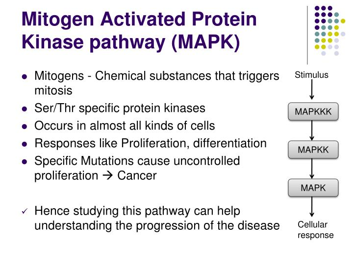 Mitogen Activated Protein Kinase pathway (MAPK)