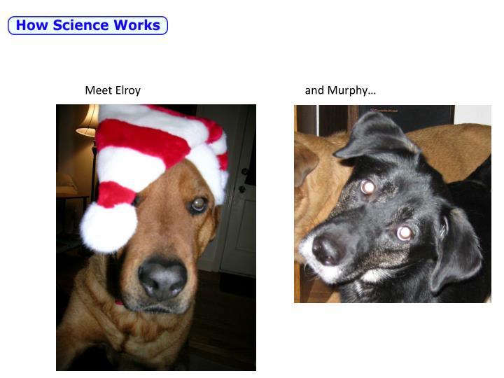 Meet Elroy                                                         and Murphy…