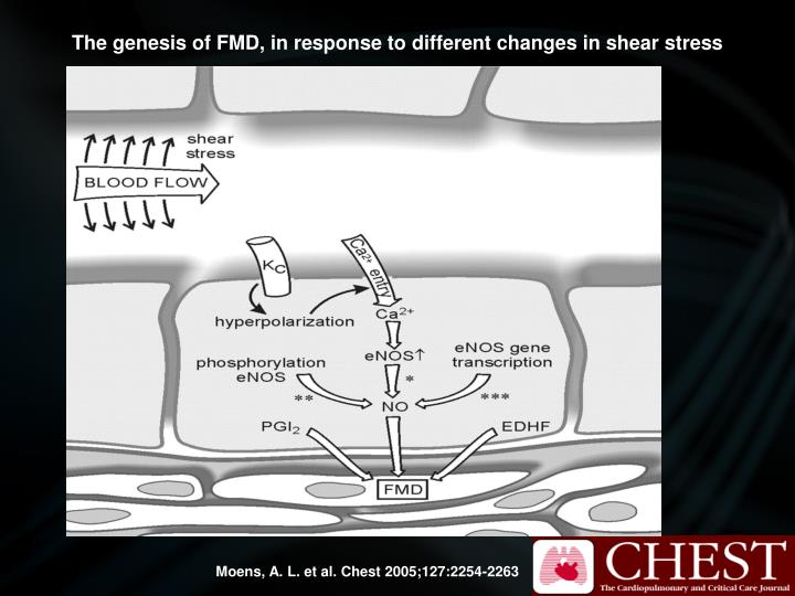 The genesis of FMD, in response to different changes in shear stress