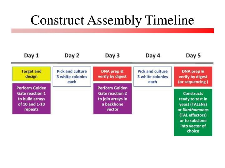 Construct Assembly Timeline
