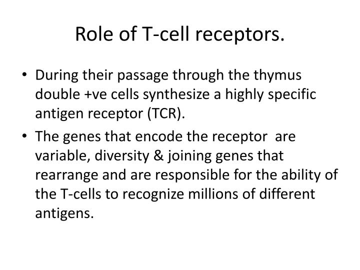 Role of T-cell receptors.