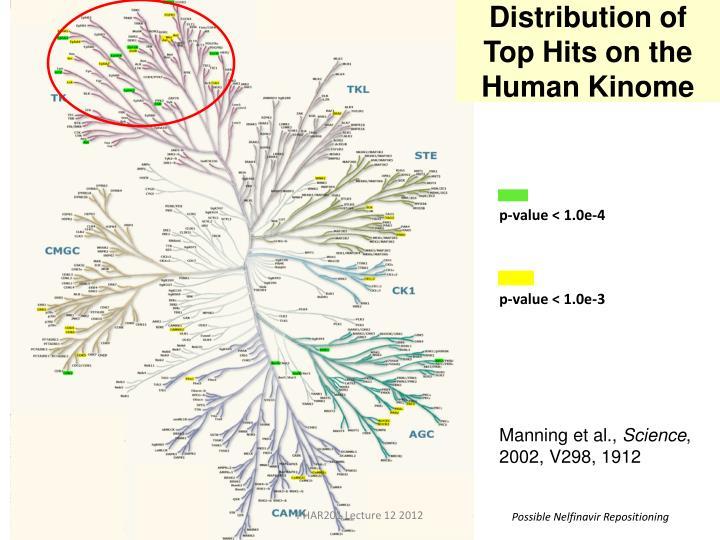 Distribution of Top Hits on the Human Kinome