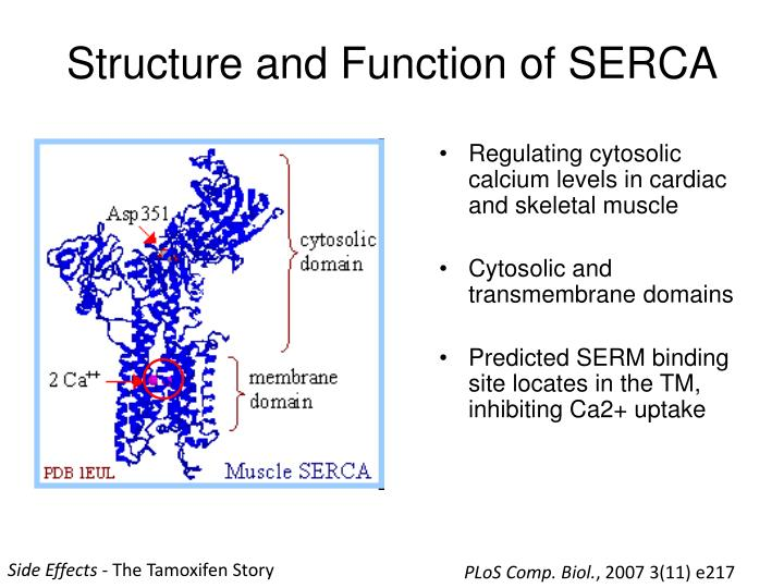 Structure and Function of SERCA