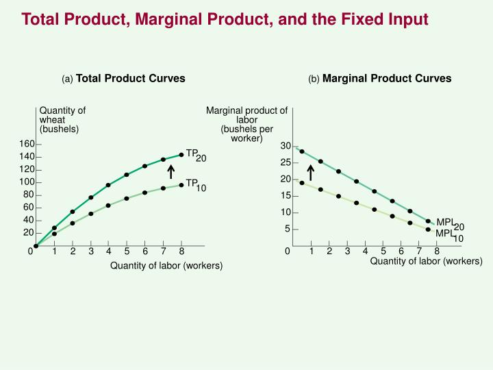 Total Product, Marginal Product, and the Fixed Input