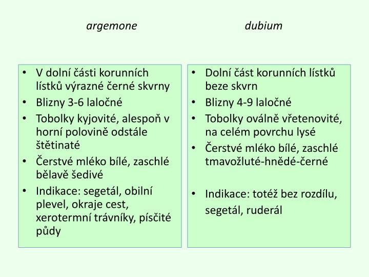 argemone