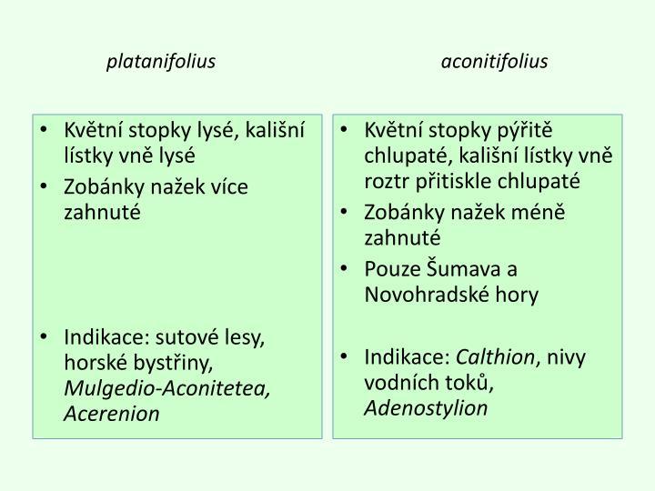 platanifolius