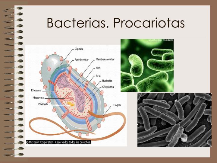 Bacterias. Procariotas