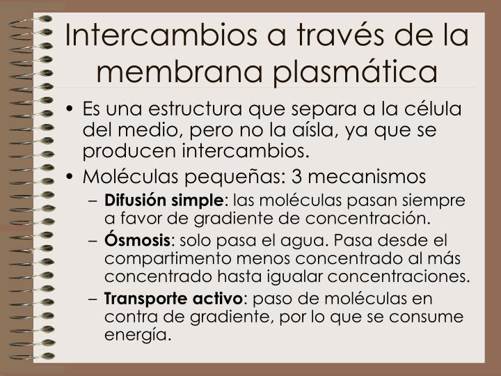 Intercambios a través de la membrana plasmática