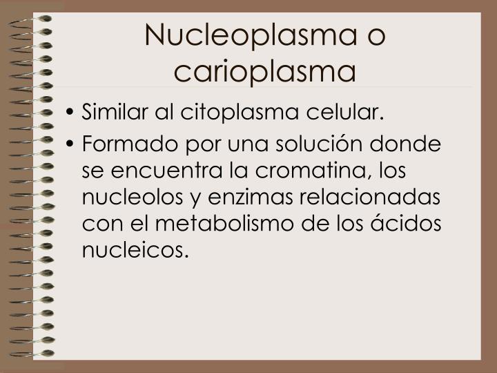 Nucleoplasma o carioplasma