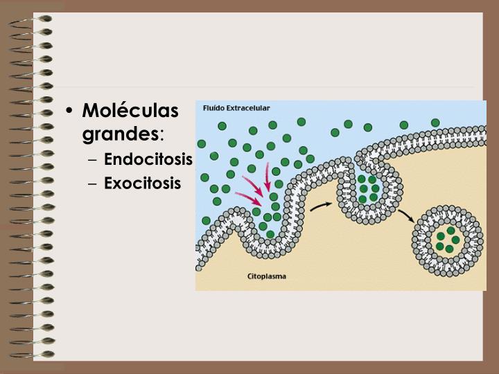 Moléculas grandes