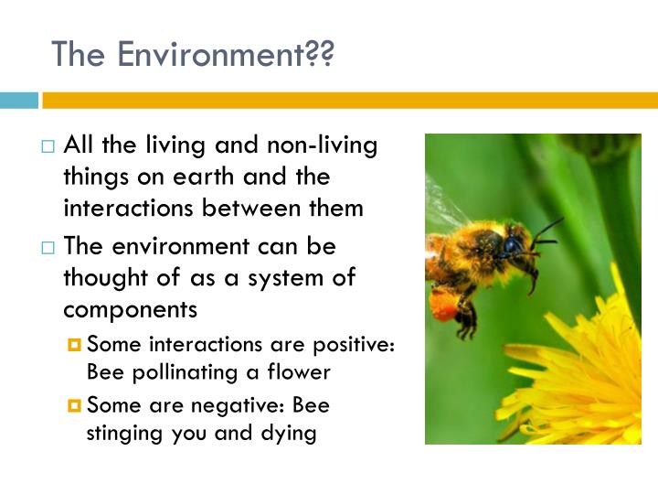 The Environment??