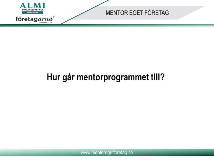 Hur går mentorprogrammet till?