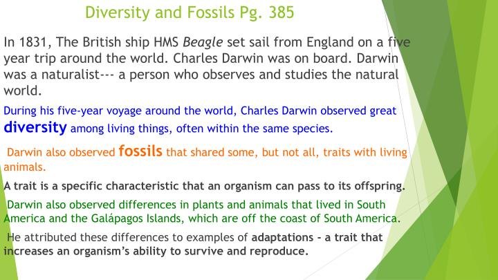 Diversity and Fossils Pg. 385