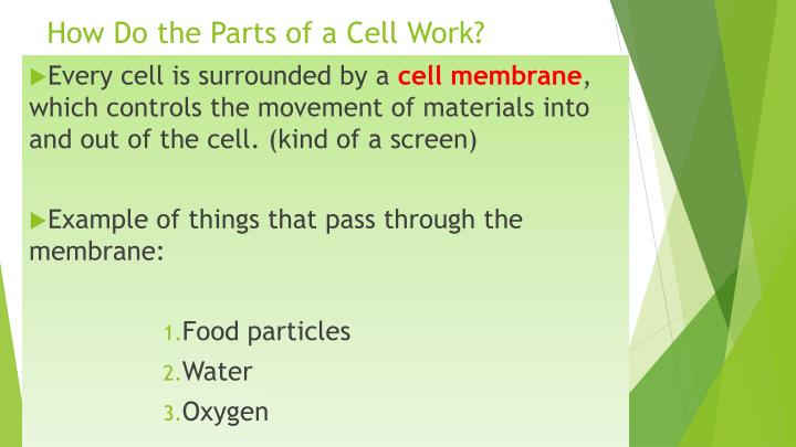 How Do the Parts of a Cell Work?
